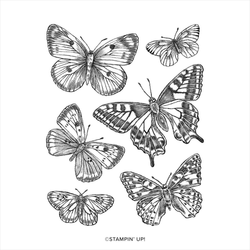 Stempelset Butterfly Brilliance - 155092